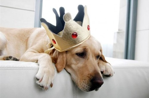 http://img.myconfinedspace.com/wp-content/uploads/2008/12/sad-king-dog-500x329.jpg