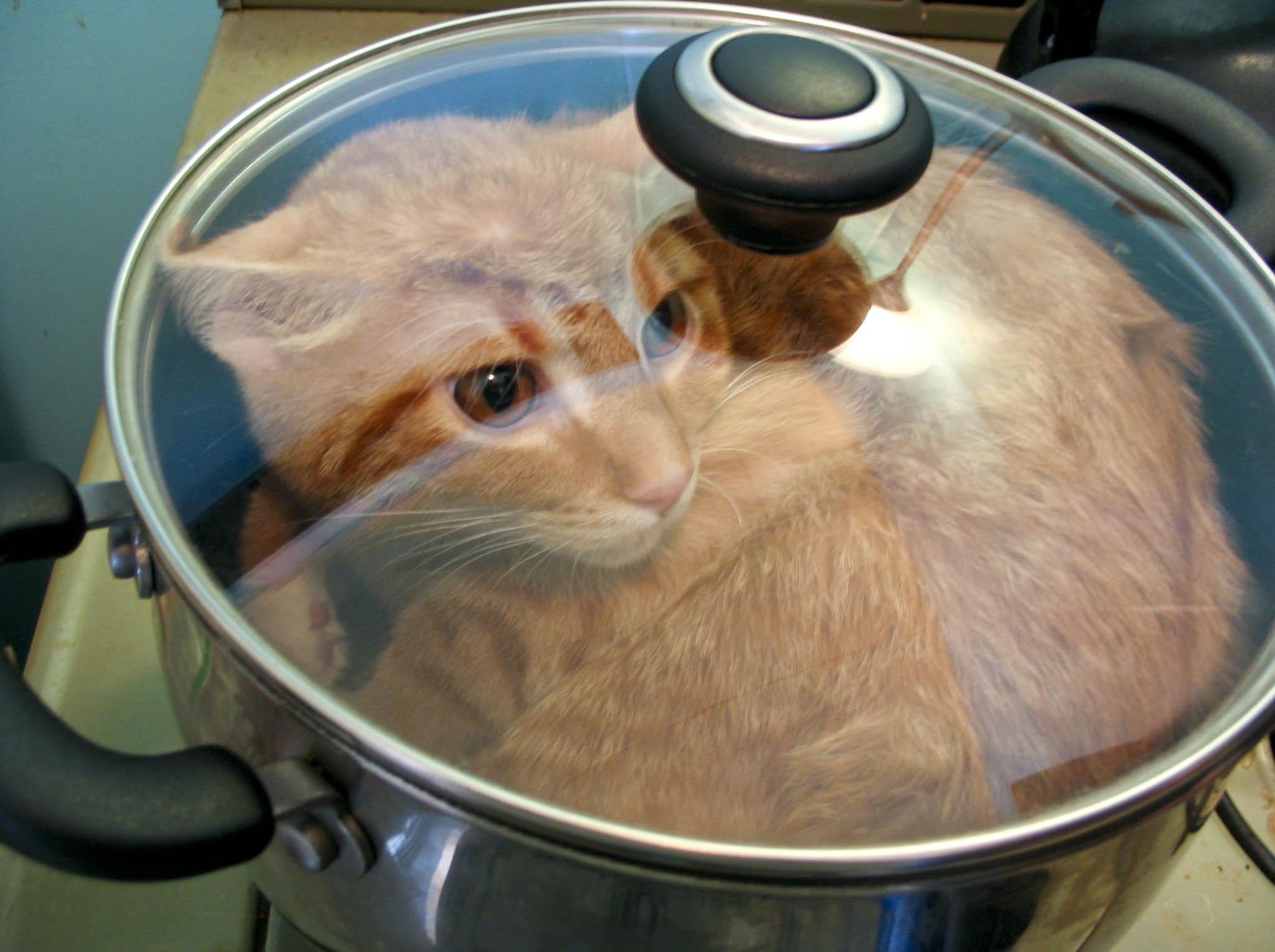 Как готовить еду для кота в домашних условиях - wikiHow 90
