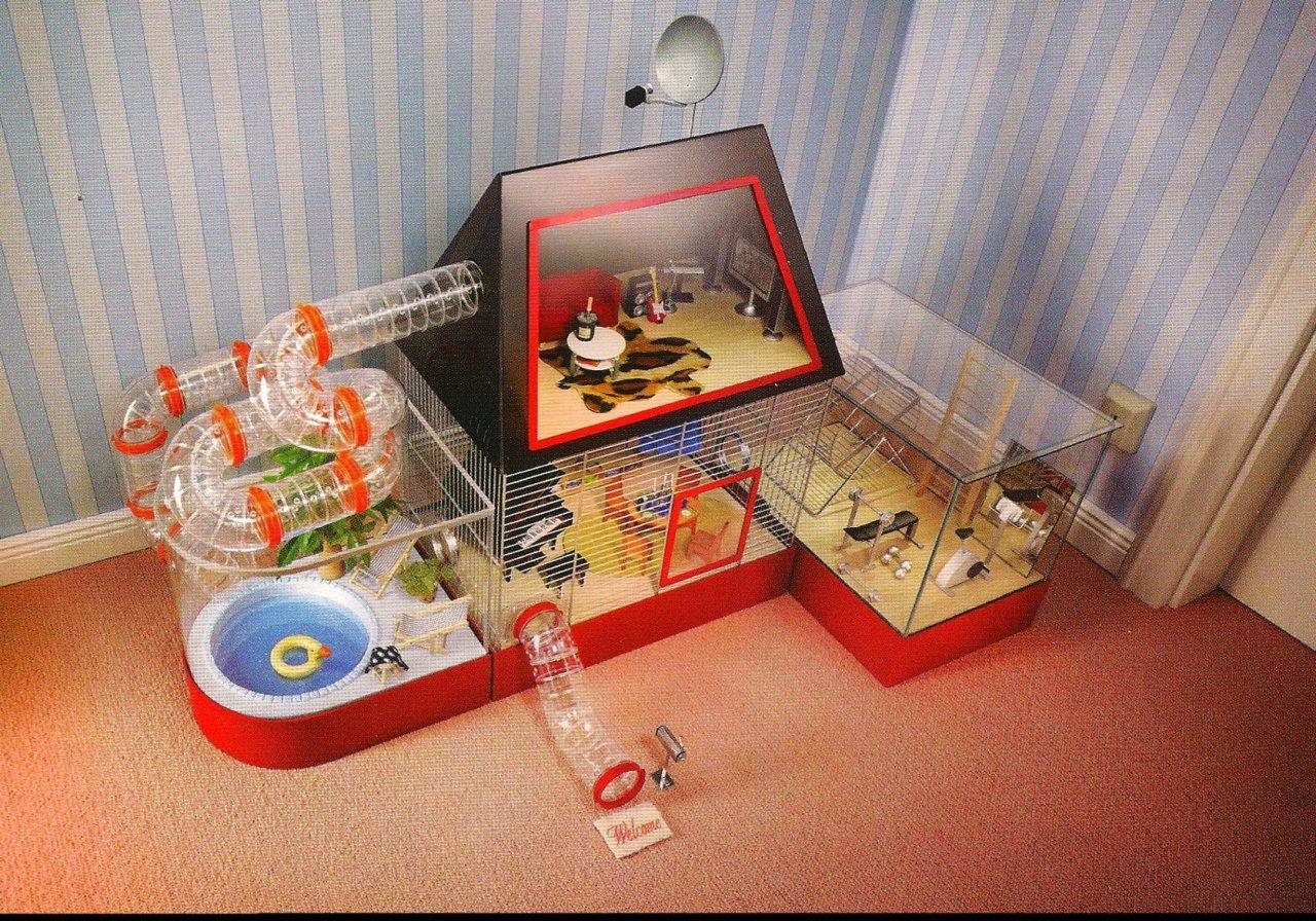 Клетка для джунгарского хомяка своими руками в домашних условиях 49