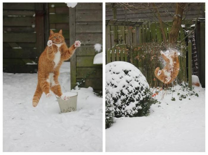 cat1-700x523.jpg