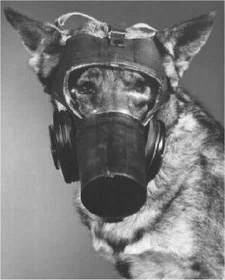 Natural Gas Poisoning Dogs